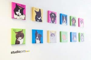 the studio venues meeting and events Birmingham pets